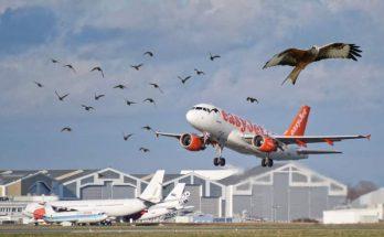 Comment les avions évitent les oiseaux ? 4
