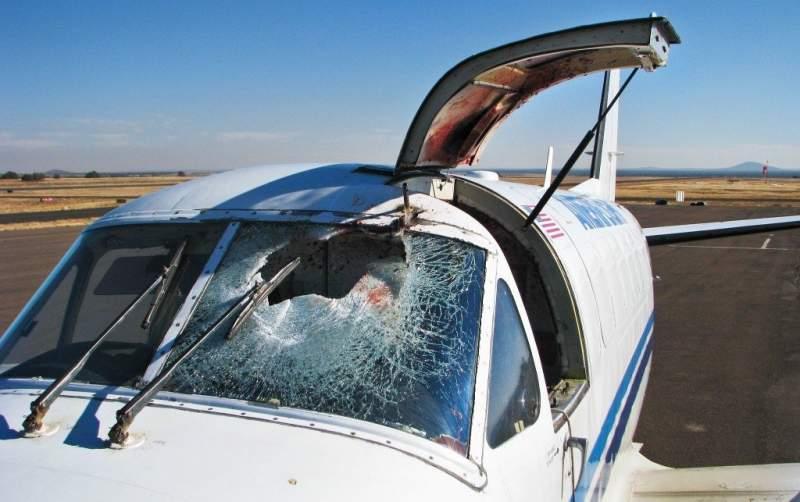 Comment les avions évitent les oiseaux ? 2