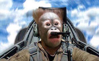 singe pilote